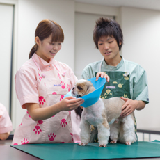 動物 学校 ヤマザキ 専門